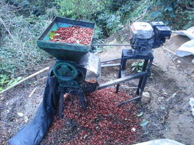 Cafe cáscada producción