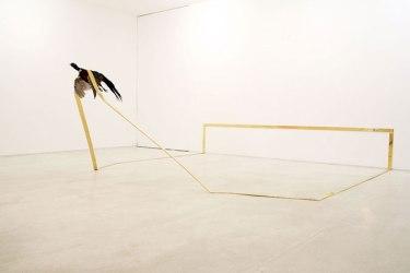 Tatiana Blass - Siège 02- installation, taxidermie encadrée en vol - 2007