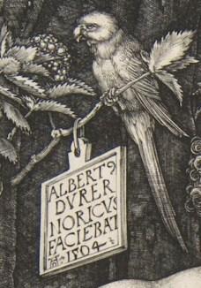 1504 perroquet Durer
