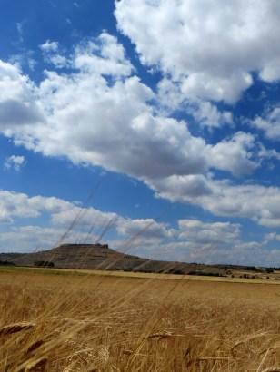 mar de trigo en Gormaz