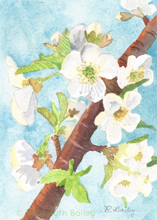 "Cherry Blossoms (2014), watercolor, 7"" x 5"""