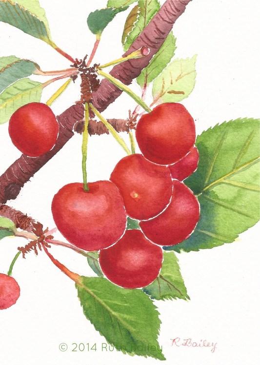"The Cherries Are Ripe!, watercolor, 7"" x 5"""