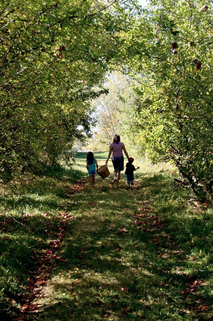 Ohio Orchard Apple Season October 2009