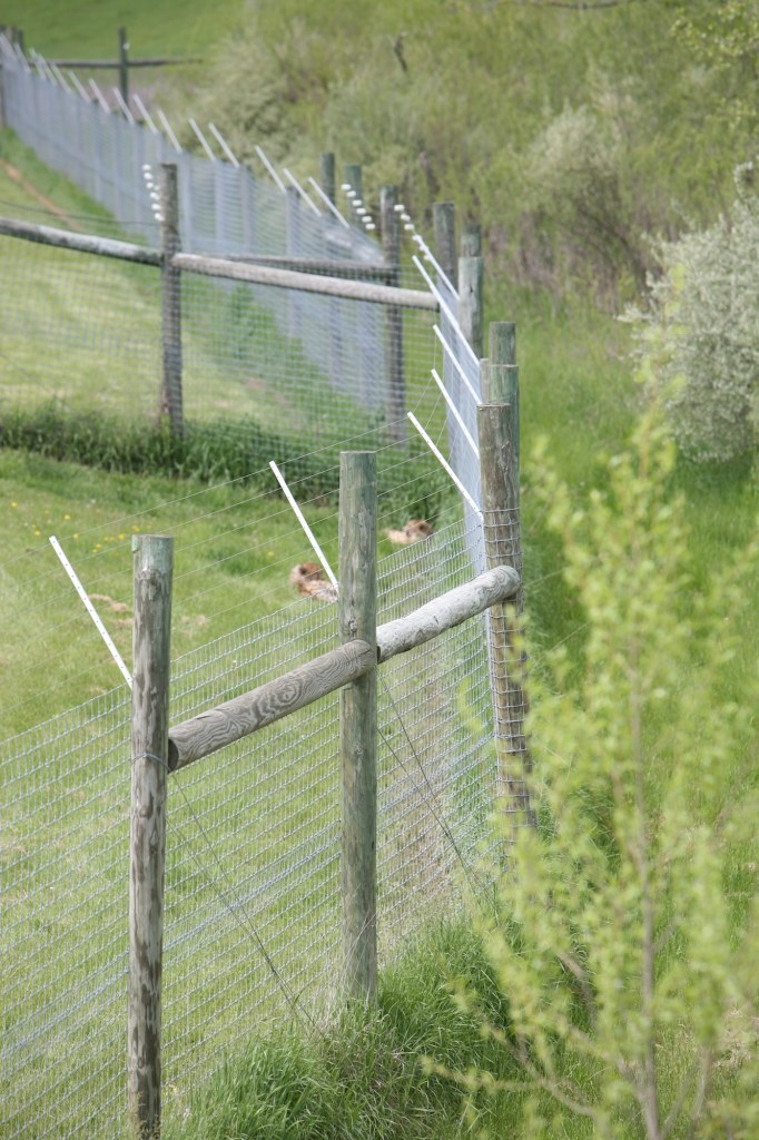 Fenced in at the Wilds