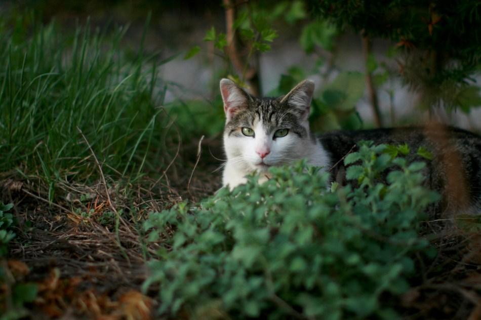 cat in catnip