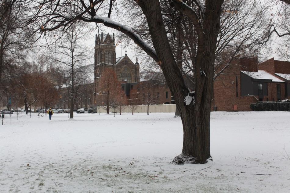 tree in snowy park