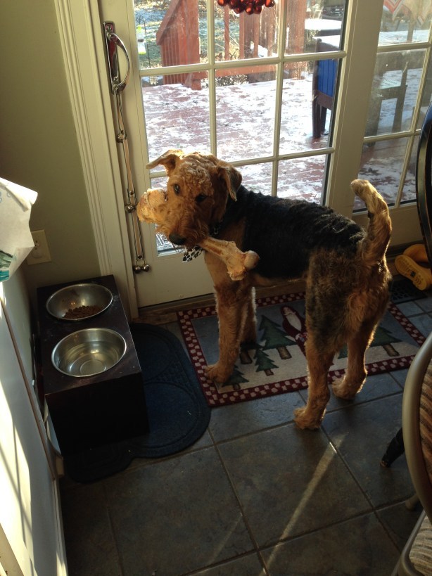 Airedale and His Bone