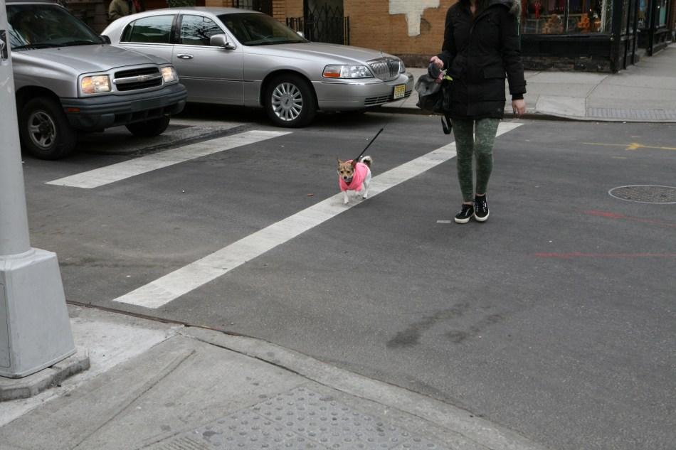 Dog in Pink on Bleecker St