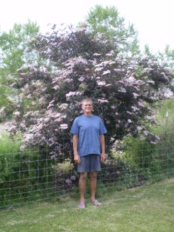 Elderberry Bush and Davi