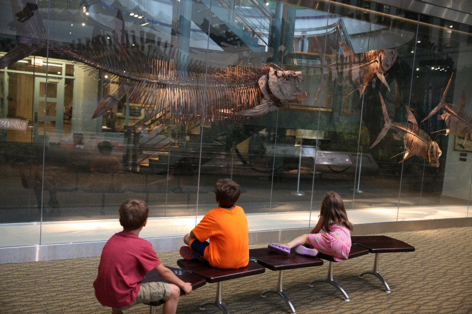 Thinking about dinosaur exhibit