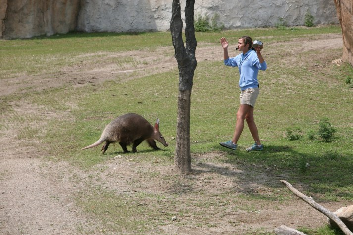 Aardvark at Watering Hole