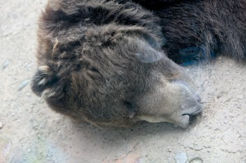 SLeeping Bear through glass