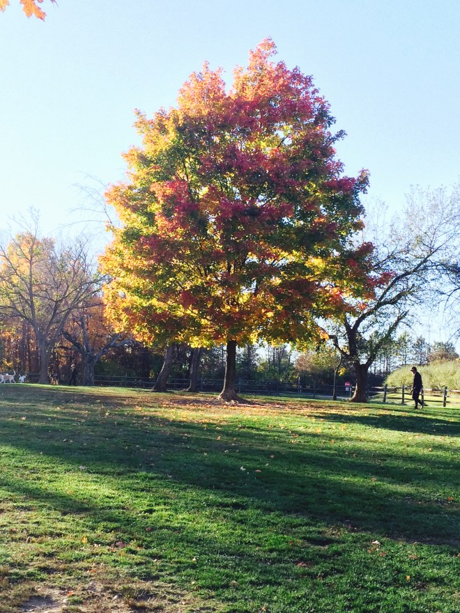 Autumn tree by Anna