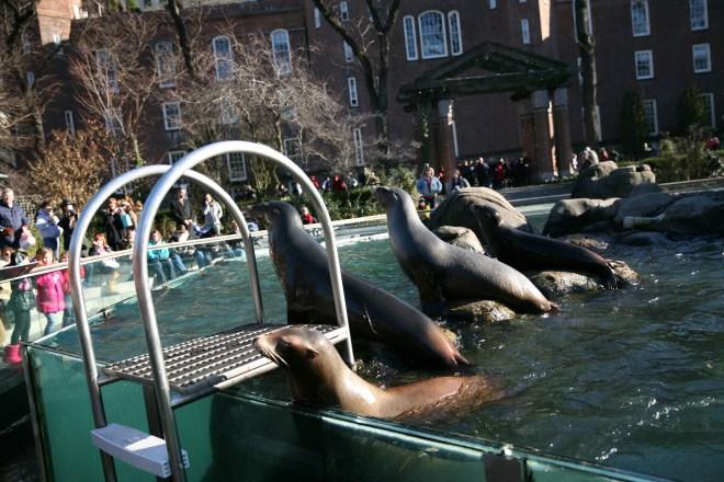 sea lions feeding time