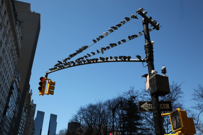 pigeons on a lightpole