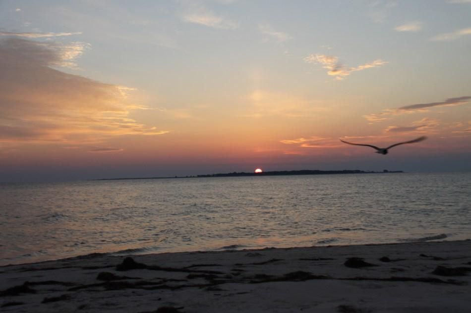sunrise and gull ST George