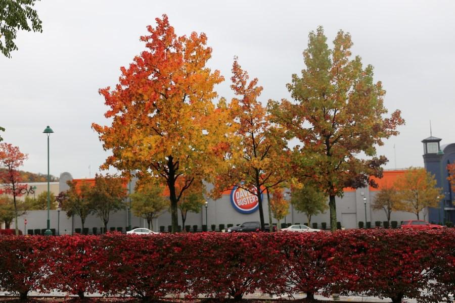 Waterfront autumn