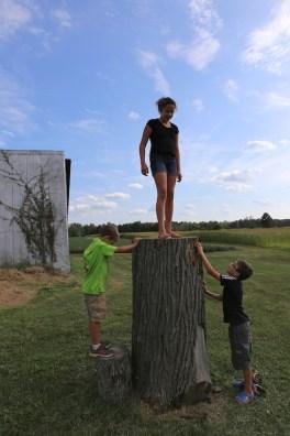 Annal atop stump
