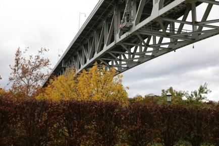 Homestead Grays in Autumn