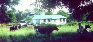 Wilson Francis Milk Barn