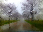 Rainy day at Calvary Cemetery Evanston