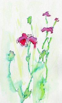 Diana's Flowers