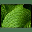 peru-balsam- for best hair loss shampoo recipes