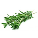 rosemary for hair conditioner