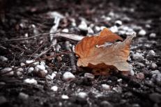 The Lone Leaf Copyright Ruth Valasini 2013 Fine Art Photographic Print