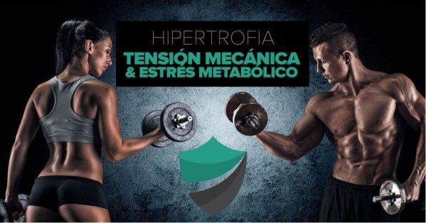 Hipertrofia, tensión mecánica y estrés metabólico