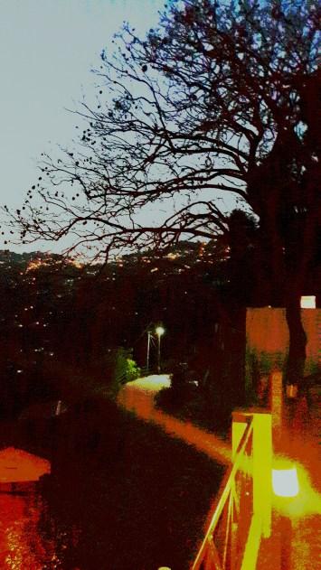 Night view2