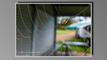 A spiders breakfast