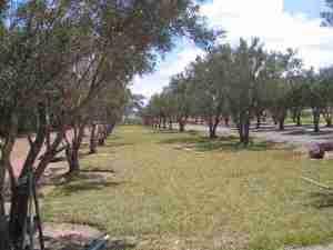 Los Olivos Grass Sites