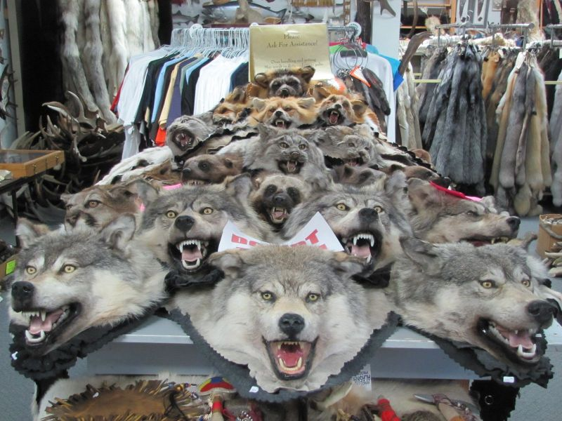 Fearsome on display for sale inside Target 445, the Alaskan Fur Exchange