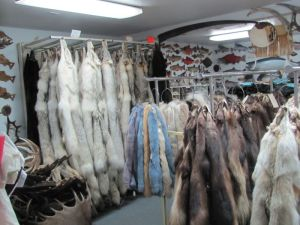 Pelts and animal skins on racks inside the Alaska Fur Exchange