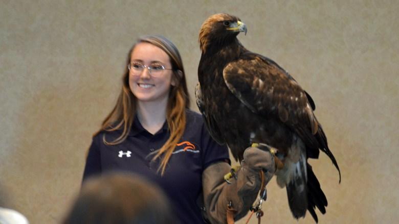 Golden eagle at Guntersville State Park with Southeastern Raptor Center