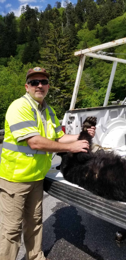 Brad Saum and Smoky Mountain Bears