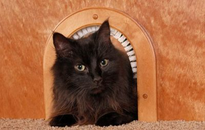 cat hole for a door - litter box storage idea for RVs, campers, or motorhomes