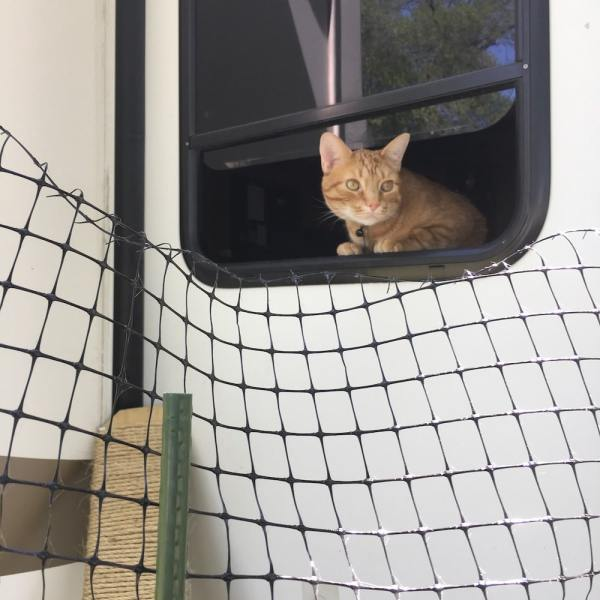 Cat looking out camper window
