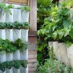 Start a Small Portable Garden in Your RV