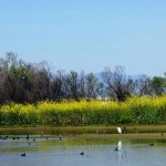 Finding the Beauty of the Sacramento Wildlife Refuge