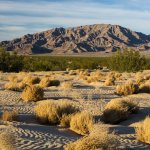 Get Out and Go RVing in New California Monuments