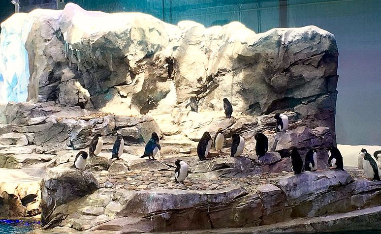 The new Polk Penguin Conservation Center at the Detroit Zoo. Photo by Gregory Varnum