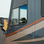 3 Tips For Full-Time RVing With Pets Who Get Stressed