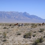 Big News For The Bureau Of Land Management