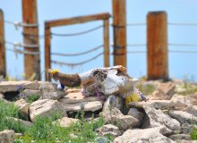 Don't Miss This Historic Site In The Bighorn Mountains