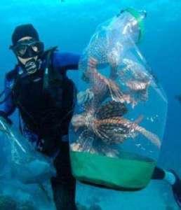Lionfishnet