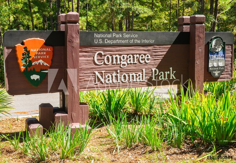 You can see the synchronous fireflies at Congaree National Park