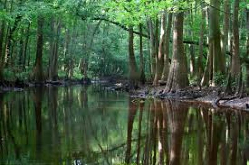 Congaree Nationsl Park home of the synchronous fireflies display each May and June