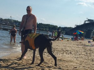 Even Great Dane's love to swim